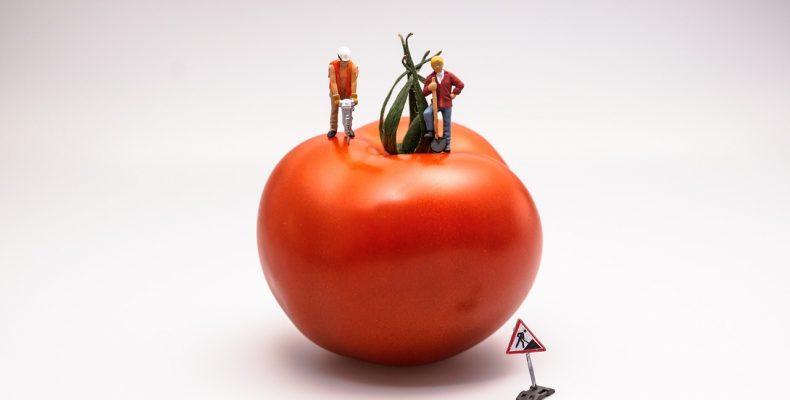 pracownicy budowlani na budowie pomidora